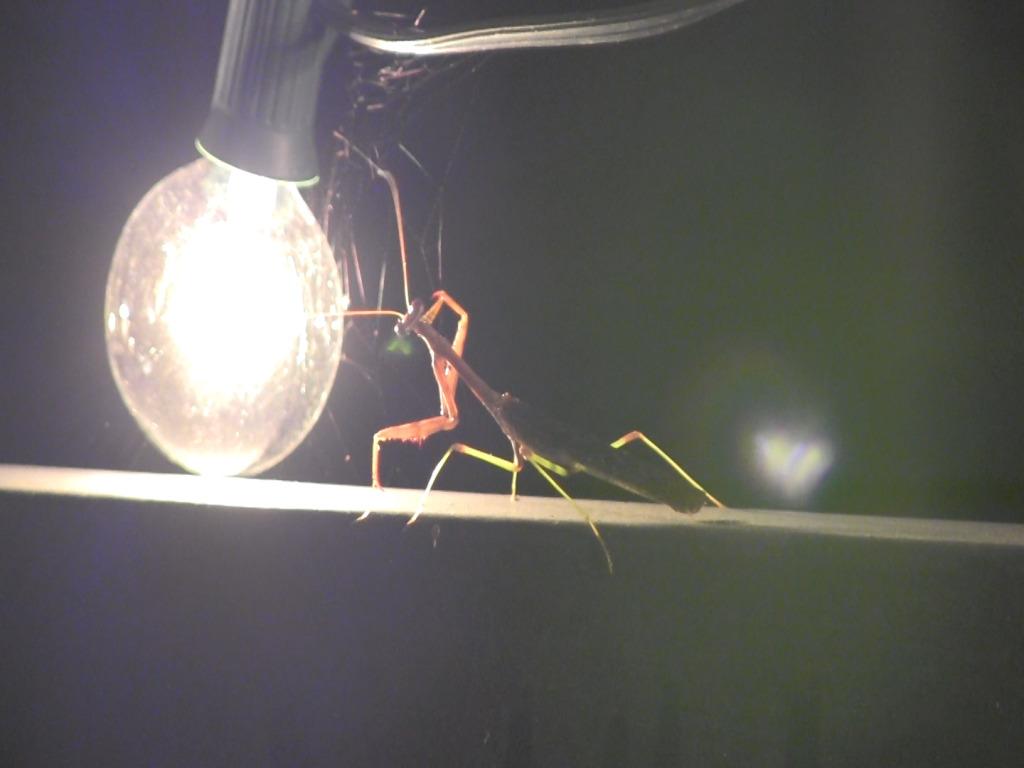 Praying Mantis sitting on railing